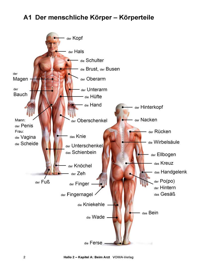 Charmant Bilder Menschlicher Körperteile Bilder - Anatomie Von ...
